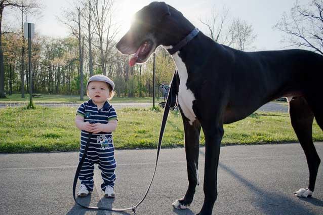 Если малыш боится собак