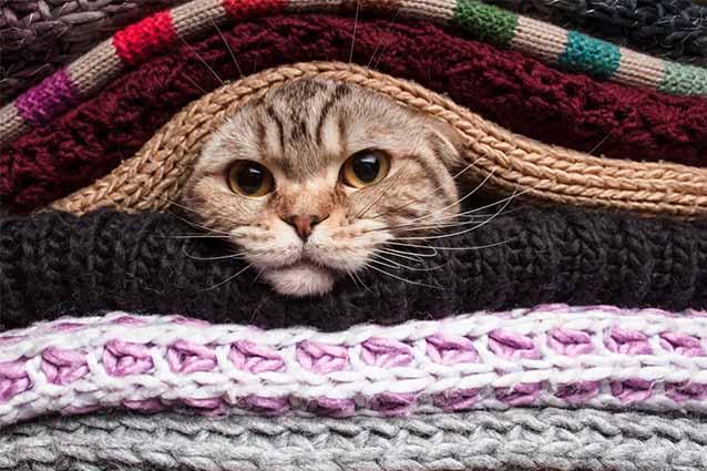 Как избавиться от кошачьей шерсти на одежде и в квартире?